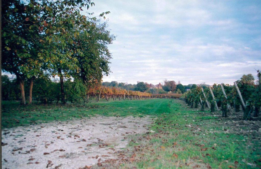 vue sur la vigne